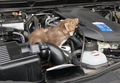 marten bite motor